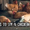 BIG-Chick-20043782eaa8b5487bf0655a27a8848de1bbb38c