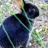 raising-rabbits1-360x193-147d0341c5ff402fc0f52d5dbea902c68a01be58