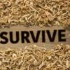 survival-essentials-360x193-b1186d7f7468775645243bb1fca4dc61d6f36bbf