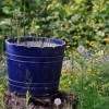 plants-you-can-grow-in-buckets-360x193-5b5c60167c71ac0ed682795a711d5309791c55be