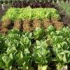 Organic-Gardening-4acbf833e0a46706c1a1b679d59f6dd50d6101ac