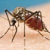 mosquito-4887b2e675eb5dd5fefe5af5517c487f6a6096c6