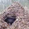 spider-shelter-ft-image-7-2efe4e32ca1184cd4f5928da321034fa2d4f4c8a